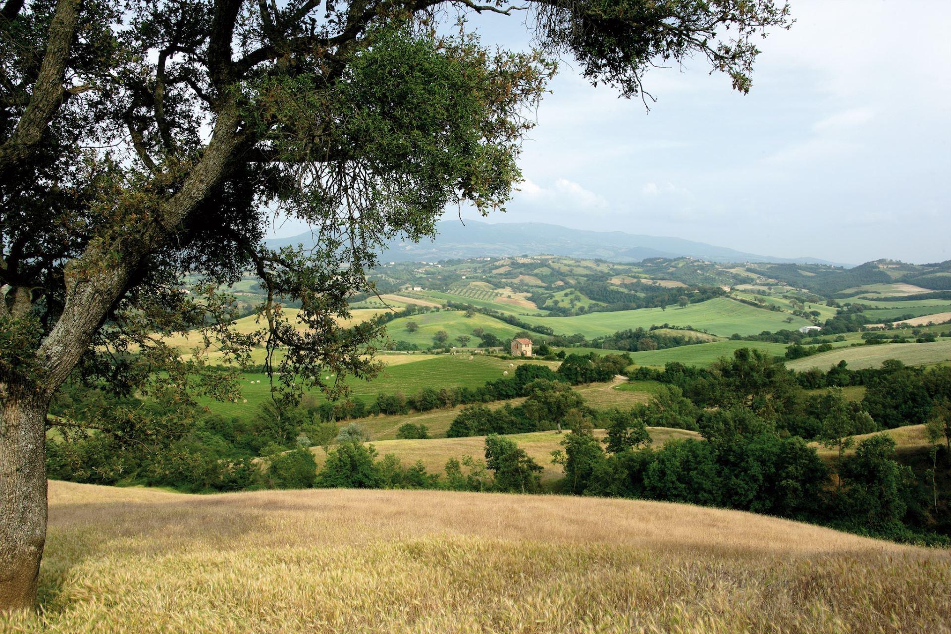 APARTMENTS WITH POOL OLINTO CINIGIANO TOSCANA