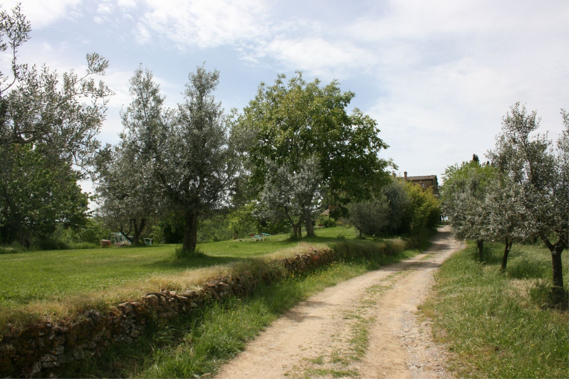 VILLAS WITH POOL VILLA BEVIGNANO MONTE SAN SAVINO TOSCANA