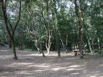 la casetta nel bosco